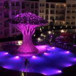 Savia proyectos olivo al lado de la piscina Fantasia Bahia Principe iluminado noche